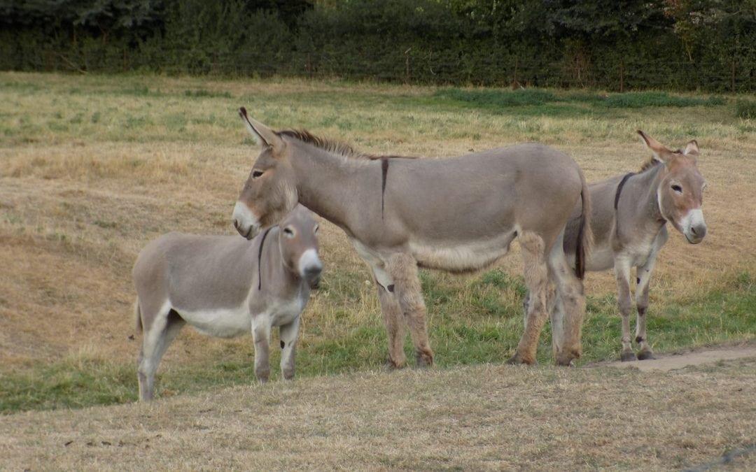 Balade aux ânes
