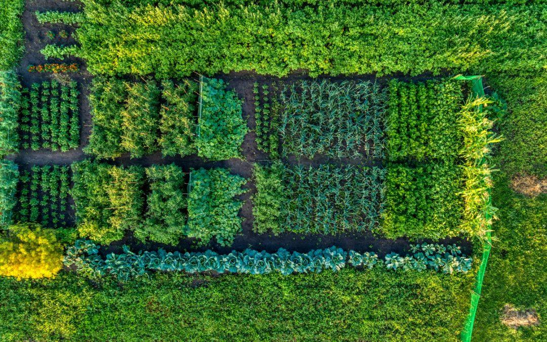 Un concours pour les amoureux des jardins